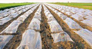 خرید نایلون عریض کشاورزی