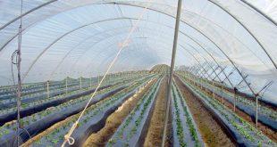 فروش نایلون عریض کشاورزی ارزان